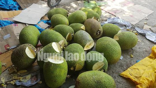 Vào mùa thu hoạch rộ, giá mít Thái siêu sớm giảm sâu - Ảnh 2.