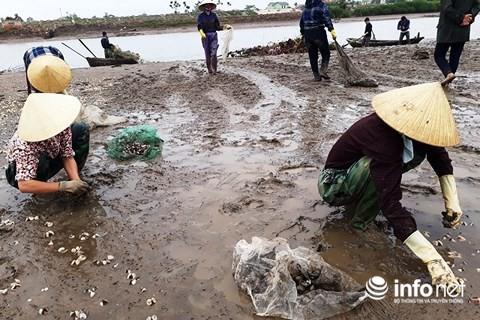 Công bố nguyên nhân gần 100 tấn ngao chết bất thường ở Thanh Hóa - Ảnh 1.