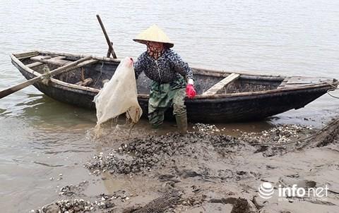 Công bố nguyên nhân gần 100 tấn ngao chết bất thường ở Thanh Hóa - Ảnh 2.