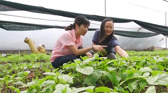 """[BizSTORY] Nguyễn Thị Quỳnh Viên và hành trình gây dựng thương hiệu rau xanh """"6 không"""" - Ảnh 1."""