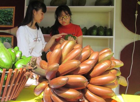 Thực hư về loại chuối đỏ 300.000 đồng/kg - Ảnh 2.