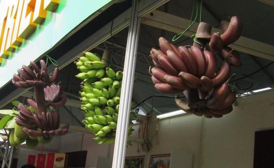 Thực hư về loại chuối đỏ 300.000 đồng/kg - Ảnh 3.