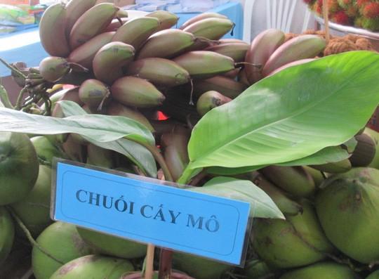 Thực hư về loại chuối đỏ 300.000 đồng/kg - Ảnh 4.