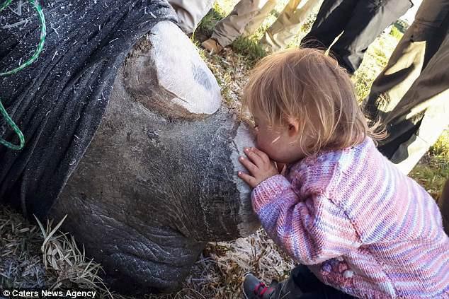 Khoảnh khắc ngọt ngào hiếm thấy: Bé gái nhẹ nhàng hôn chú tê giác bị cưa sừng khiến người lớn cũng phải lặng người suy ngẫm - Ảnh 1.
