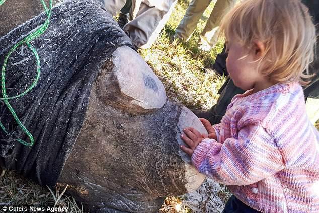 Khoảnh khắc ngọt ngào hiếm thấy: Bé gái nhẹ nhàng hôn chú tê giác bị cưa sừng khiến người lớn cũng phải lặng người suy ngẫm - Ảnh 2.
