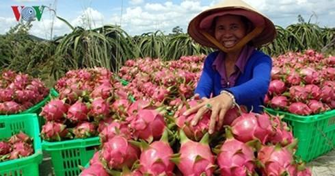 Trung Quốc dẫn đầu các thị trường nhập khẩu rau quả Việt Nam - Ảnh 1.