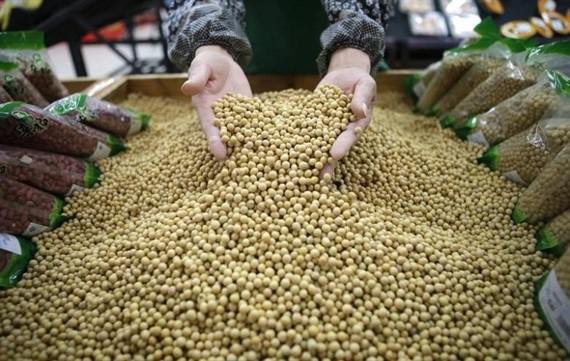 Tranh thủ để nhập khẩu đậu nành với giá có lợi từ Mỹ - Ảnh 1.