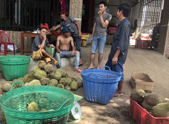 """Thực hư về """"sầu riêng ăn trả hạt giá 15.000 đồng/kg - Ảnh 3."""