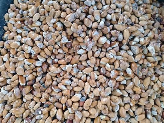"""Thực hư về """"sầu riêng ăn trả hạt giá 15.000 đồng/kg - Ảnh 6."""