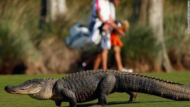 [Nghề lạ] Mò hồ lặn bóng: Kiếm tiền từ việc thú đánh golf của đại gia - Ảnh 3.