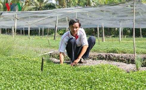 Thu nhập hàng trăm triệu từ mô hình trồng cải xà lách xoong - Ảnh 2.