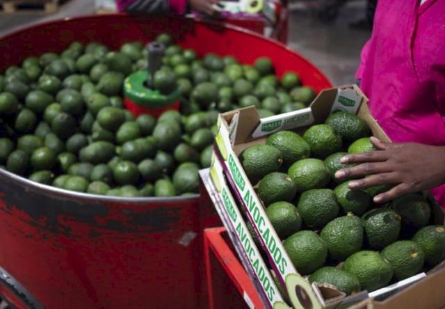 Bơ - loại quả bình thường ở Việt Nam nhưng được xem như vàng ở Nam Phi, mang tới sự đổi đời cho cả một quốc gia - Ảnh 3.