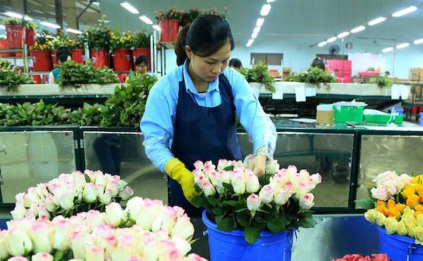 Thiếu hụt nhân lực làm khó doanh nghiệp nông nghiệp công nghệ cao - Ảnh 1.