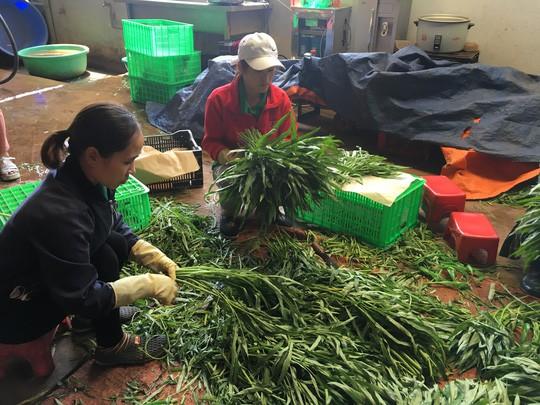 TP HCM nhập nông sản, nhập luôn hàng trăm tấn rác mỗi đêm - Ảnh 1.