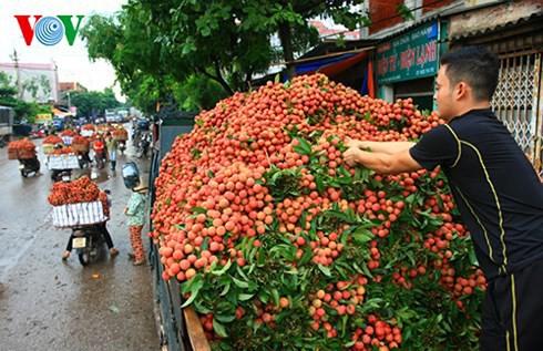 Vải thiều Bắc Giang đã xuất đi hơn 30 nước, giá trị 153 triệu USD - Ảnh 1.