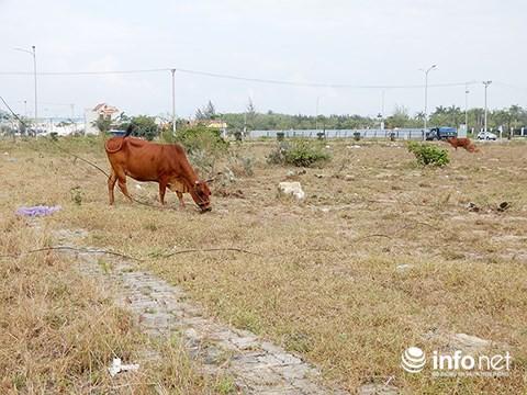 Đà Nẵng: Thừa 14.589 lô đất tái định cư, dân mất đất sản xuất, mất việc - Ảnh 2.