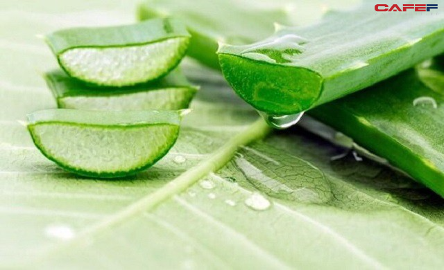 Đánh bay ợ nóng, khó tiêu và hỗ trợ điều trị đau dạ dày với loại cây mọng nước dễ kiếm, rẻ tiền, có sẵn ở Việt Nam  - Ảnh 1.