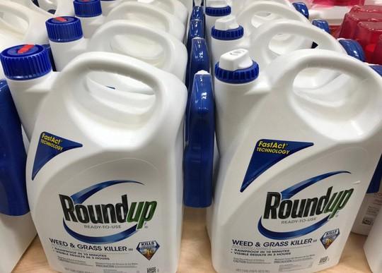 Không cảnh báo ung thư, Monsanto bị buộc bồi thường 289 triệu USD - Ảnh 1.