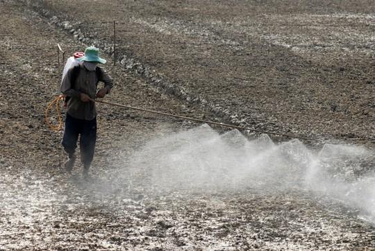 Tai tiếng Monsanto: Hồi chuông cảnh tỉnh cho Việt Nam - Ảnh 1.