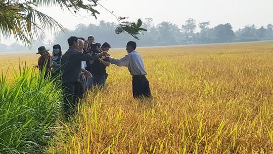 Trồng lúa sạch lợi nhuận hơn 50 triệu đồng/ha - Ảnh 1.