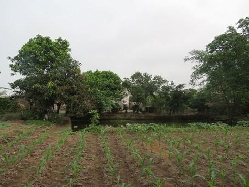 TP HCM hưởng lợi gì từ việc chuyển đổi 26.000 ha đất nông nghiệp? - Ảnh 1.