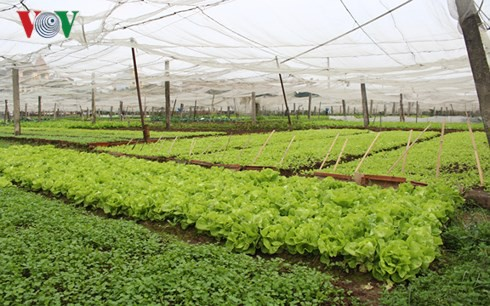 Đất đai nhỏ lẻ là nút thắt lớn nhất cản dòng đầu tư vào nông nghiệp - Ảnh 1.