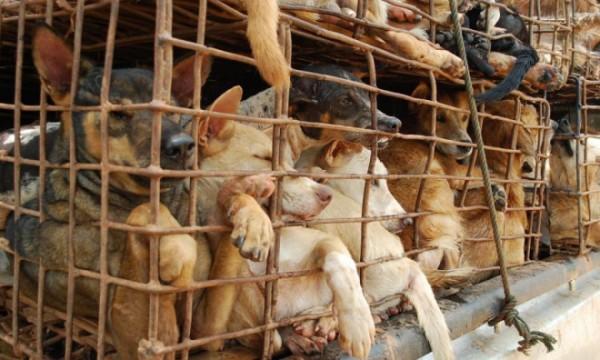 Góc nhìn thú vị của nhiều báo lớn quốc tế về vấn đề ăn thịt chó tại Việt Nam - Ảnh 4.