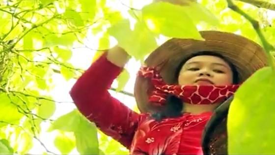 Lá trầu xuất khẩu sang Trung Quốc được giá, người trồng lãi cao - Ảnh 6.