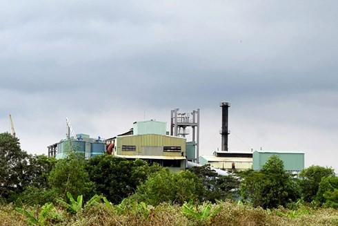 Nhà máy chậm thu mua, hàng nghìn ha mía sắp thành củi khô - Ảnh 1.