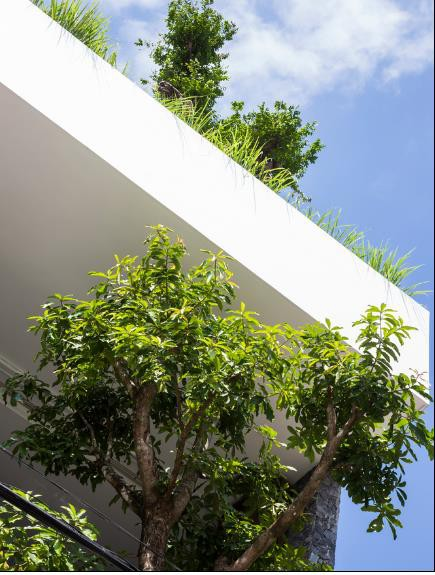 Nhà phố ở Nha Trang gây sốt với thiết kế xanh mướt nhờ những miệt vườn nhỏ - Ảnh 2.