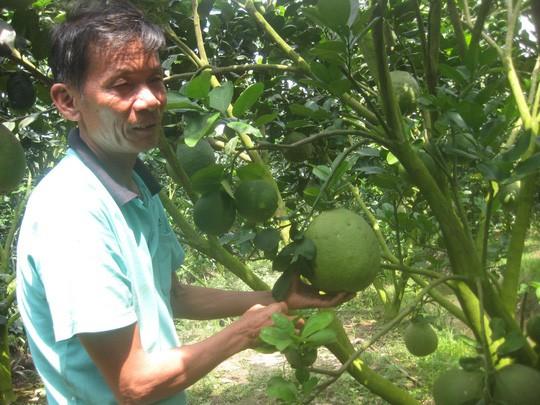 Cận Tết, giá trái cây đặc sản ở miền Tây cao ngất ngưởng - Ảnh 2.
