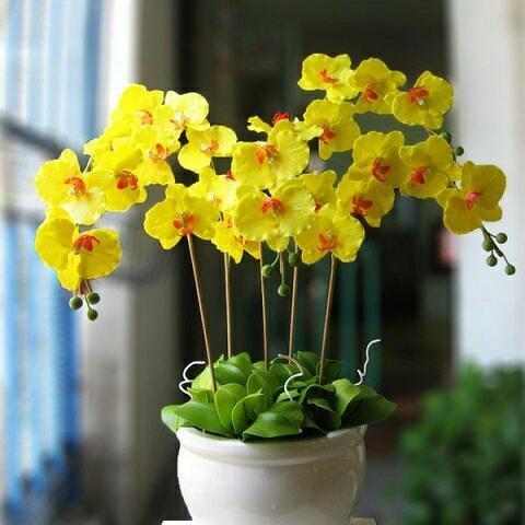 Những loại hoa gia đình nào cũng nên trưng trong ngày Tết để rước thêm may mắn và tài lộc vào nhà - Ảnh 7.