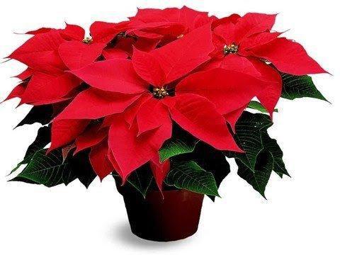 Những loại hoa gia đình nào cũng nên trưng trong ngày Tết để rước thêm may mắn và tài lộc vào nhà - Ảnh 8.