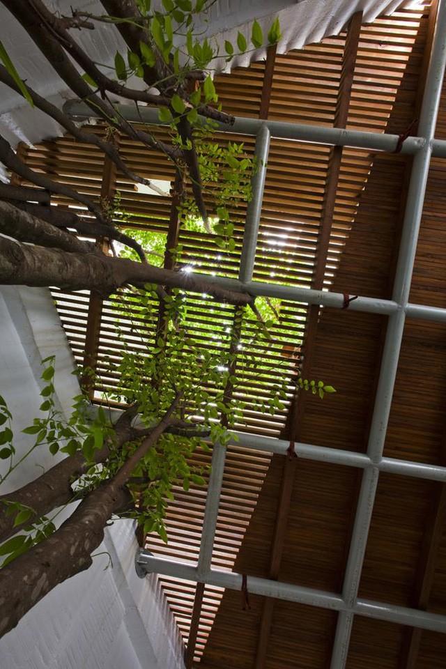 Mặc dù diện tích rất hạn chế nhưng không như những ngôi nhà thông thường tận dụng tối đa diện tích để sinh hoạt, chủ nhà này dành cả một góc nhà để cây khế vươn cao.