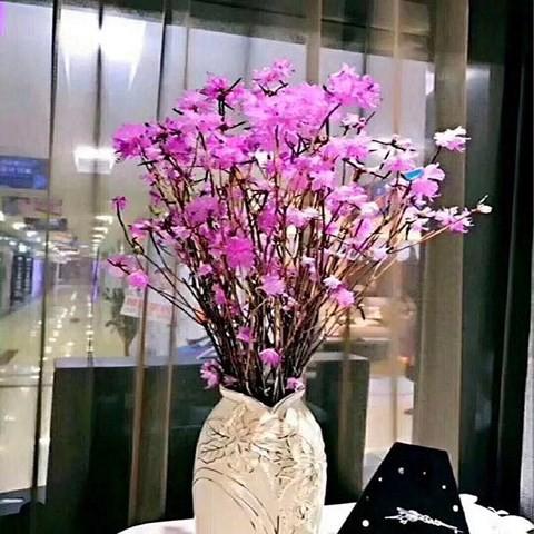 Xuất hiện loài hoa mới đỗ quyên ngủ đông khiến chợ hoa Tết lên cơn sốt - Ảnh 4.