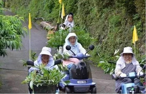 Các cụ già ởKamikatsu rất hăng hái với nghề đi săn lá cây