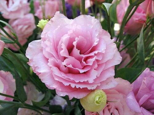 Những loại hoa gia đình nào cũng nên trưng trong ngày Tết để rước thêm may mắn và tài lộc vào nhà - Ảnh 6.