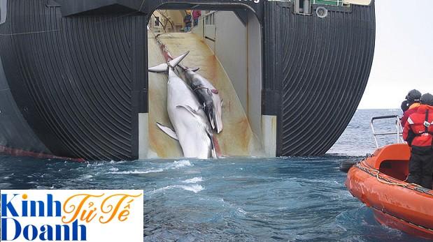Ngăn Nhật đánh bắt cá voi, chống Mỹ thử bom nguyên tử, tổ chức hoạt động vì môi trường này khiến cả thế giới ngưỡng mộ - Ảnh 1.