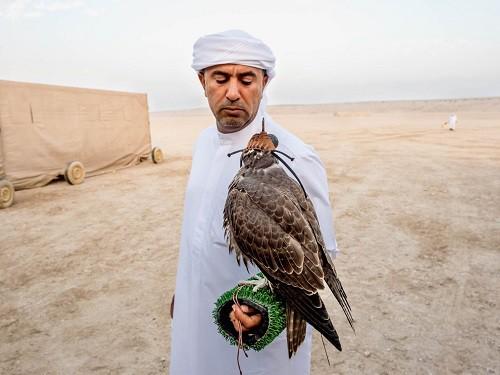 Huấn luyện chim ưng: Nghề kiếm ra hàng triệu USD ở Trung Đông - Ảnh 1.