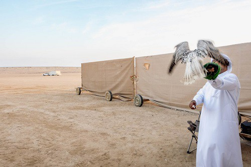 Huấn luyện chim ưng: Nghề kiếm ra hàng triệu USD ở Trung Đông - Ảnh 11.