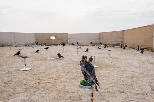 Huấn luyện chim ưng: Nghề kiếm ra hàng triệu USD ở Trung Đông - Ảnh 4.
