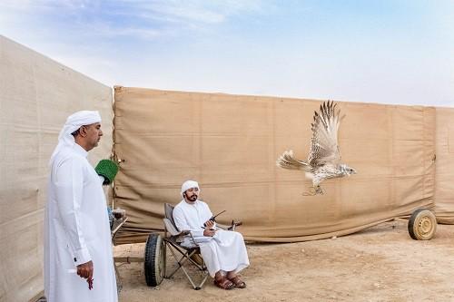 Huấn luyện chim ưng: Nghề kiếm ra hàng triệu USD ở Trung Đông - Ảnh 5.
