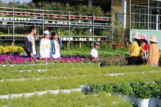 Chưa Tết, làng hoa lớn nhất miền Tây đã nườm nượp khách - Ảnh 12.