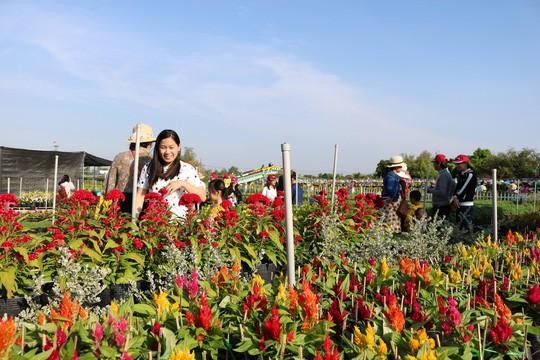 Chưa Tết, làng hoa lớn nhất miền Tây đã nườm nượp khách - Ảnh 6.