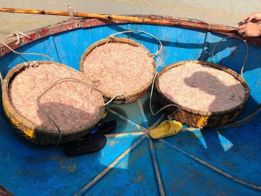 Cận Tết, ngư dân Quảng Ngãi trúng đậm mùa ruốc - Ảnh 7.