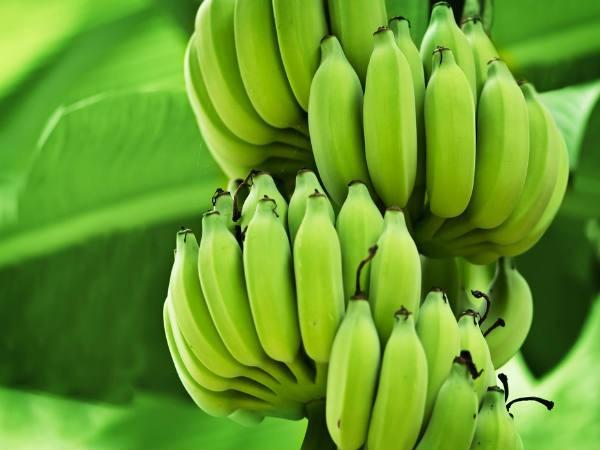 Chuối xanh: Lợi ích sức khỏe và rủi ro khi ăn mà ai cũng cần biết - Ảnh 1.