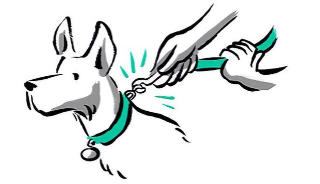Từ ngưỡng cửa của một điều vĩ đại, startup dắt chó đi dạo Wag đã tuột dây và suy sụp như thế nào - Ảnh 3.