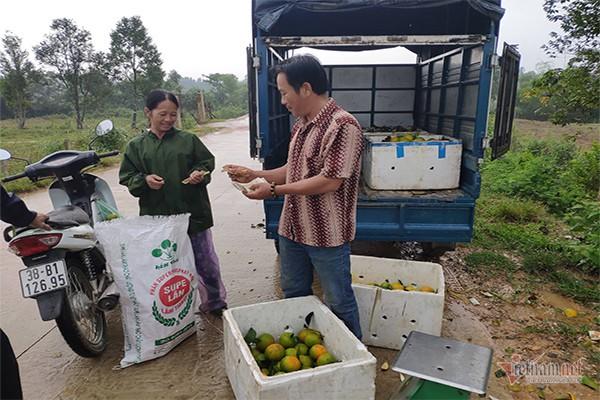 Hàng chục tấn cam đặc sản rụng tả tơi giữa vụ thu hoạch - Ảnh 2.