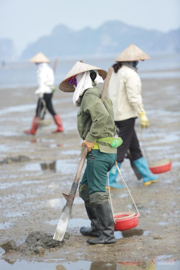 Đội nắng vác mai đi đào vàng biển, mỗi ngày thu tiền triệu - Ảnh 2.