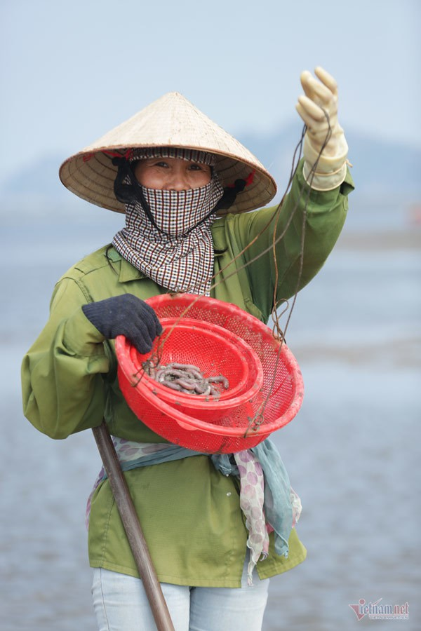 Đội nắng vác mai đi đào vàng biển, mỗi ngày thu tiền triệu - Ảnh 4.